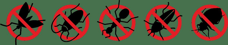 Zwalczanie mącznika młynarka dezynsekcja