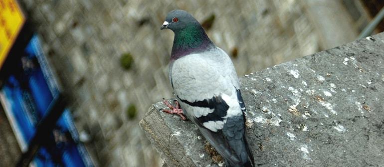 odstraszanie ptaków, zabezpieczanie przed ptakami