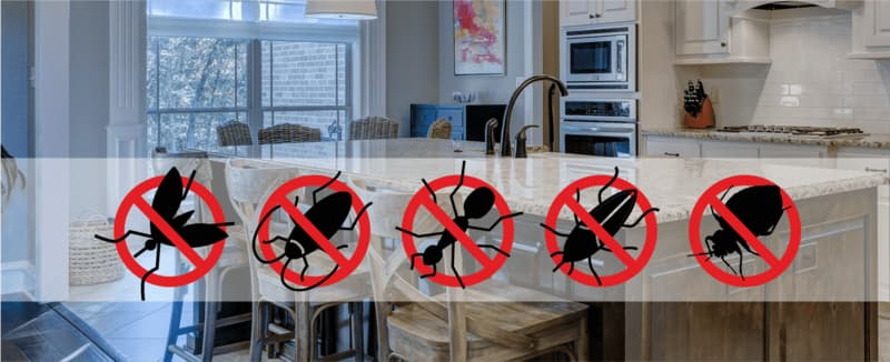 robaki w kuchni