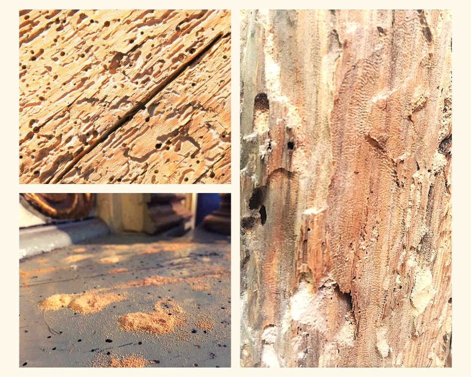 uszkodzenia po szkodnikach drewna